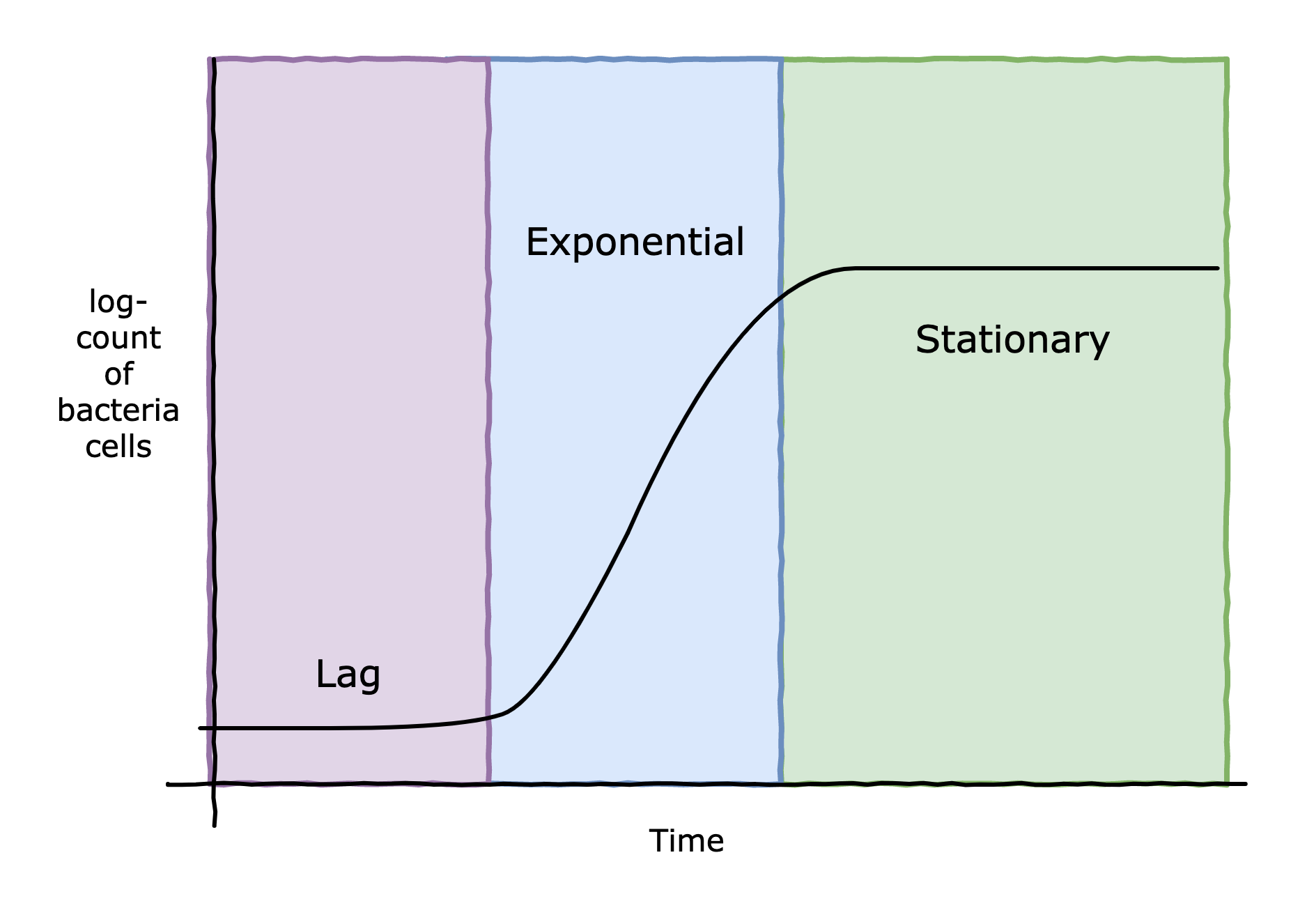 growth phase bacteria lag log exponential stationary