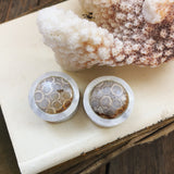 Balinese Fossilized Coral Plugs