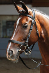 Bridle Halter Harry's Horse