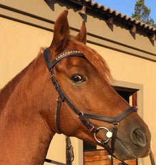 Arena Diva Rose Gold Anatomic Bridle