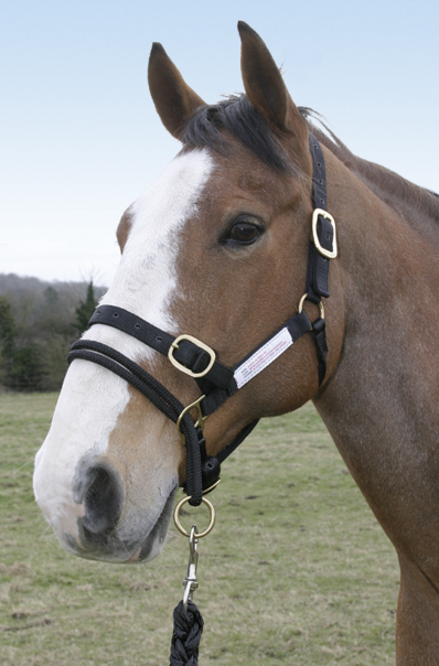 Monty Roberts Dually Halter