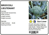 BROCCOLI LIEUTENANT - 4 PACK