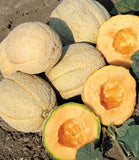 CANTALOUPE GOLD STAR - FLAT OF 32 PLANTS
