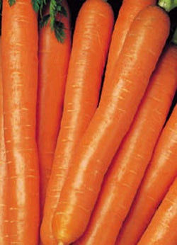 CARROTS SCARLET NANTES - FLAT OF 32 PLANTS
