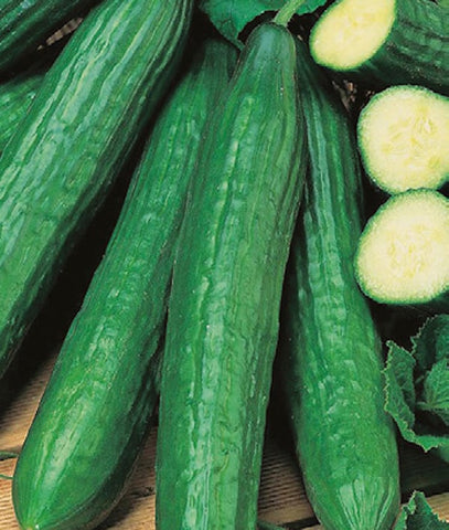 CUCUMBER ENGLISH LONG SWEET CRUNCH - FLAT OF 32 PLANTS