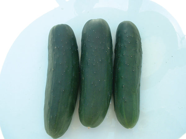 CUCUMBER SLICING MARKETMORE - FLAT OF 32 PLANTS