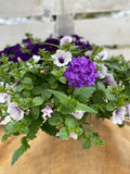 COMBO LILAC FESTIVAL - HANGING BASKET