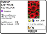 PETUNIA EASY WAVE RED VELOUR - JUMBO 6 PACK