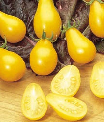 TOMATO YELLOW PEAR - 4'' POT