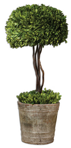 The Temple Preserved Topiary is preserved while freshly picked, natural evergreen foliage looks and feels like living boxwood. Single topiary is potted in mossy stone finished terracotta planter. Indoor use only. Great for areas where greenery is need for the 'not so green thumb.'