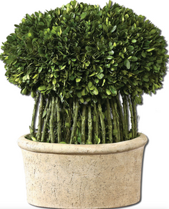 Trell Preserved Boxwood is Preserved while freshly picked, natural evergreen foliage looks and feels like living boxwood arranged atop willow branches in a mossy, stone finished terracotta planter.