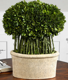 Trell Preserved Boxwood