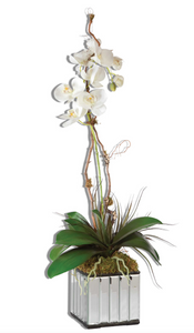 The Ovation Orchid in Mirrored Vase is beautiful. Gracefully arching stems of white orchids atop a bed of moss, nestled in a glass mirrored cube container. Base is 6x6.