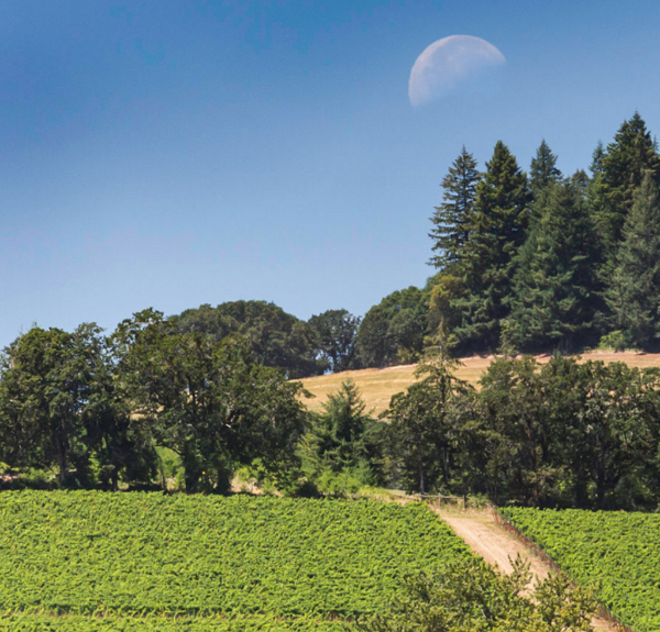 New Moon Rising: Willamette Valley's Lingua Franca