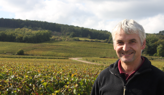 Cornu's Slice of the Sweet Spot: .5 Hectares of Corton-Bressandes