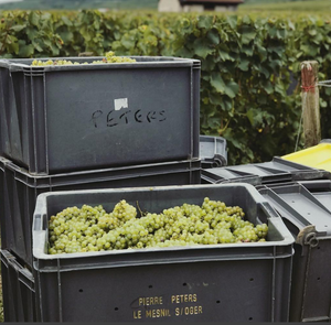 The Diamond of Le Mesnil:  Champagne Pierre Péters: