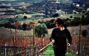 South Side Montalcino Love:  Unrivaled Finesse of Stella di Campalto