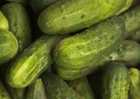 Cucumber 'National Pickling' - 6 Plants - Streambank Gardens