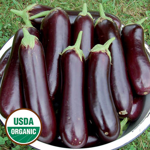 Eggplant 'Diamond' Plants