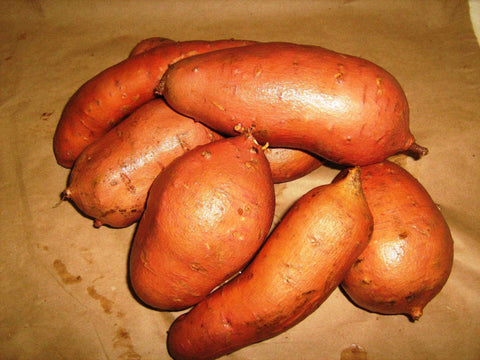 Sweet Potato 'Nemagold' - 6 Plants - Streambank Gardens