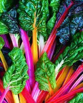 Swiss Chard 'Rainbow Mix Improved' - 6 Plants - Streambank Gardens  - 1