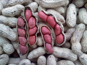 Tennessee Red Valencia Peanut Plants