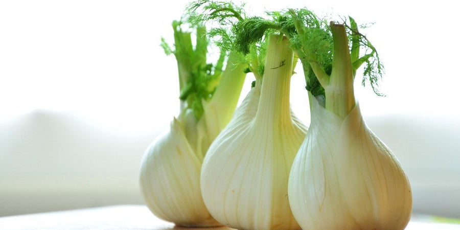 how to grow florence fennel