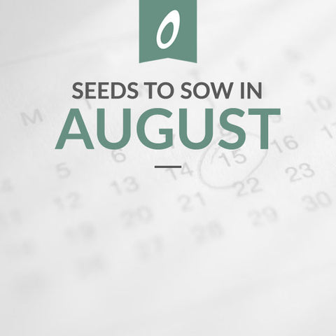 August Sowing