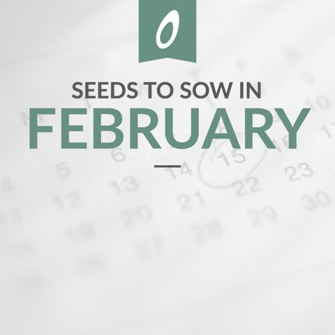 February Sowing