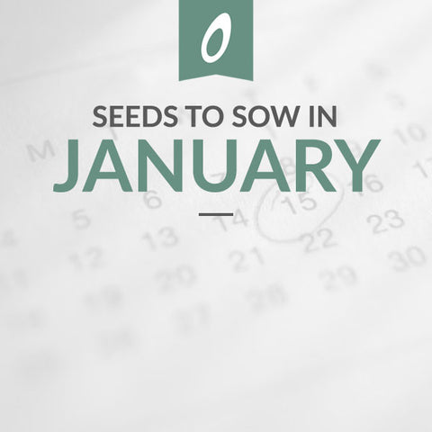 January Sowing