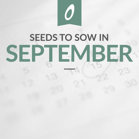 September Sowing