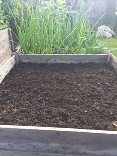raised bed sown with buckwheat green manure