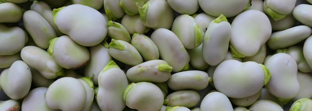 What to grow in October