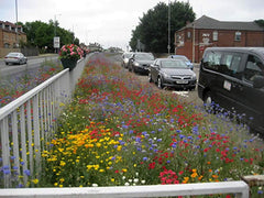 Rotherham Council wildflowers
