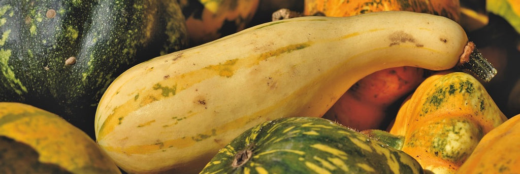 Squash growing guide