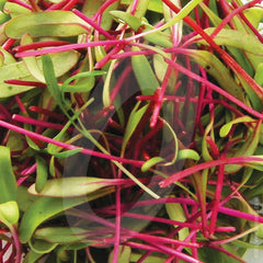 beetroot microleaves