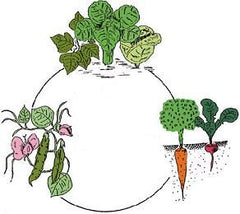 3 course crop rotation plan