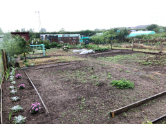 allotment sandy soil green manure