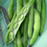 Broad Bean Aquadulce Seeds