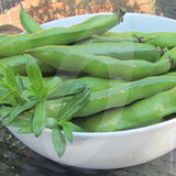 Broad Bean The Sutton Seeds