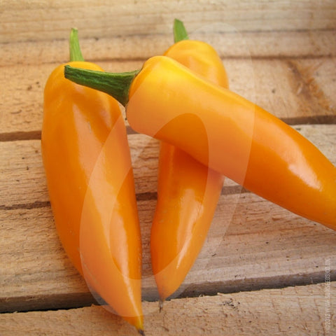 Bulgarian Carrot Chilli Seeds