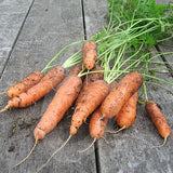 Carrot Early Nantes 2 Seeds