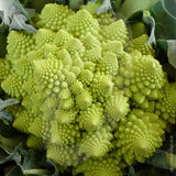 Cauliflower Romanesco Seeds