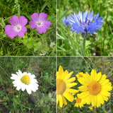 Cornfield Annuals Wildflower Seed Mix