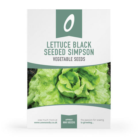 Lettuce Black Seeded Simpson Seeds
