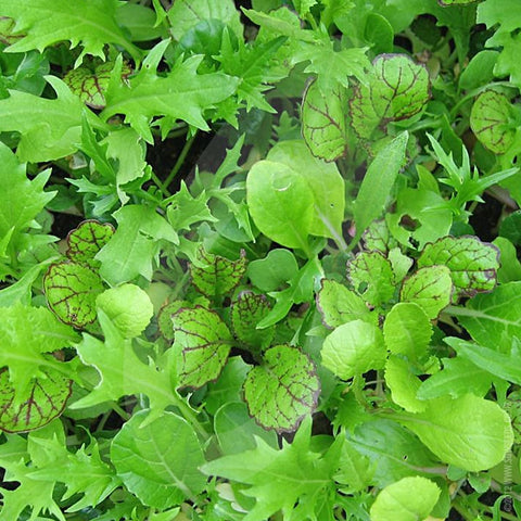 Salad Leaf Oriental Mix Seeds