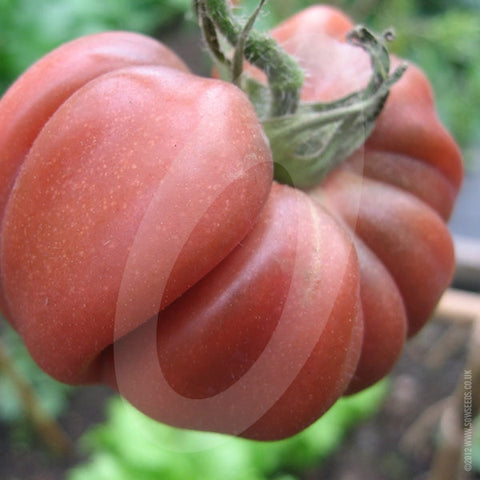 Tomato Black Russian Seeds