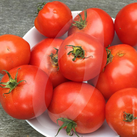 Tomato St Pierre Seeds