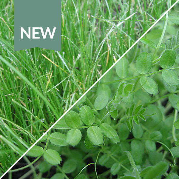 Winter Mix Green Manure Seeds