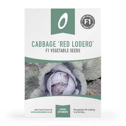 cabbage red lodero f1 vegetable seed